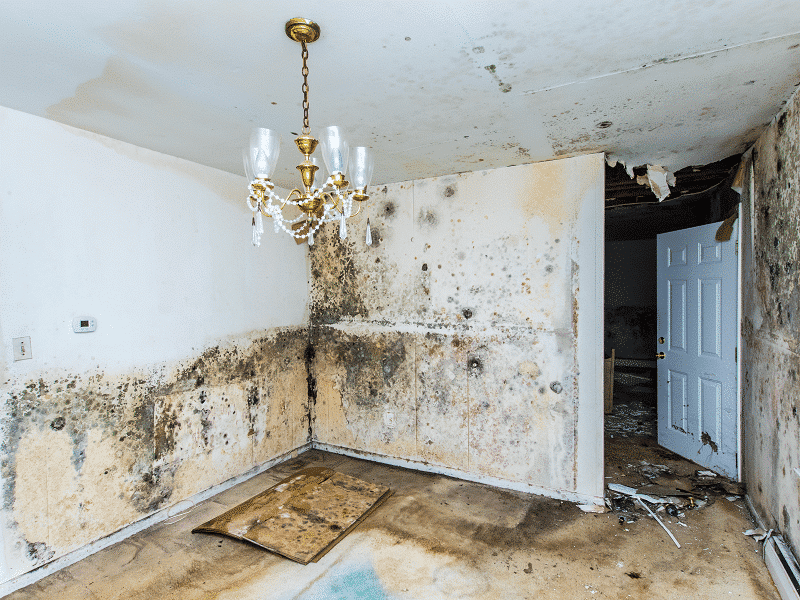 mold and water damage inside a house | DryCare Restoration | Best Water Fire Mold Damage Restoration and Crime Scene Cleanup, Los Angeles Ventura Orange County